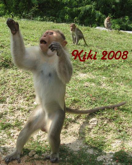 Kiki 2008