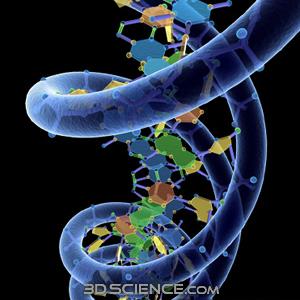 3D Model DNA
