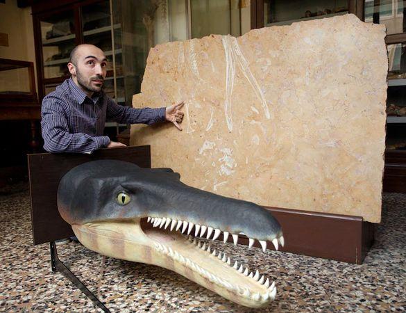 Crocodile Fossil Kitchen Counter
