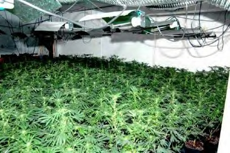 Indoor marijuana farm