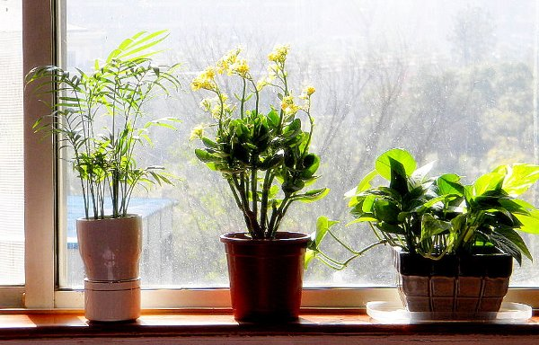 Improving air quality in your home - Plants can improve ambience home ...